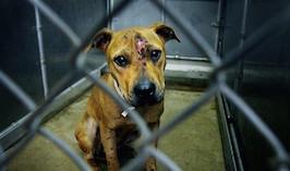 жестокое обращение с животными3